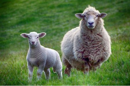 Как правильно ухаживать за продукцией с шерстяным наполнителем?
